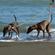 ペットと一緒に旅行を楽しむ ペットツーリズム普及のカギは飼い主のマナー