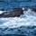 東茂美「鯨〔いさな〕とワカメと島歌と」